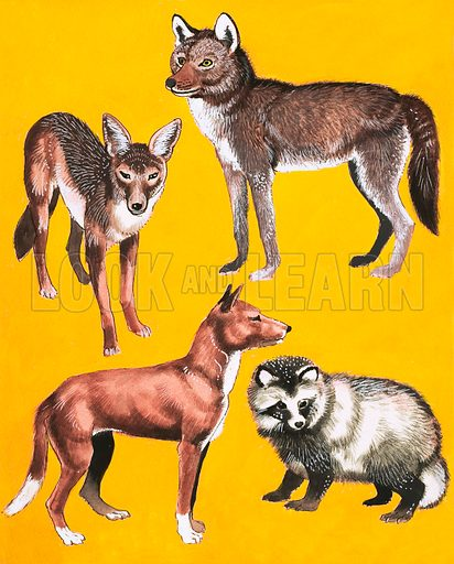 Wild dogs montage. Original artwork from Treasure Annual 1970.
