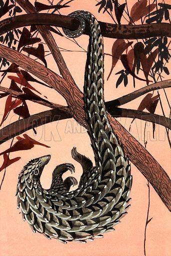 Pangolin. Original artwork from Treasure Annual 1970.