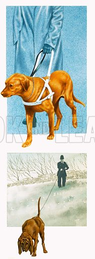 Dogs, including a guidedog for the blind and police sniffer dog. Original artwork.