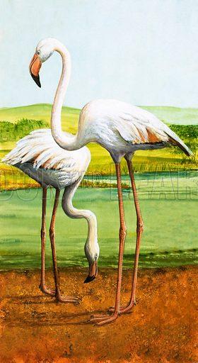 Flamingoes. Original artwork from Treasure no. 208 (7 January 1967).