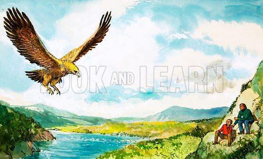 Golden Eagle. Original artwork.