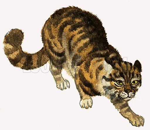 Cat. Original artwork.