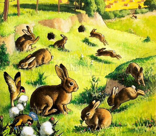Rabbits at play. Original artwork.