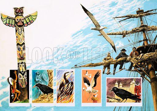 Birds of ill-omen, including albatross, rook and phoenix. Original artwork.