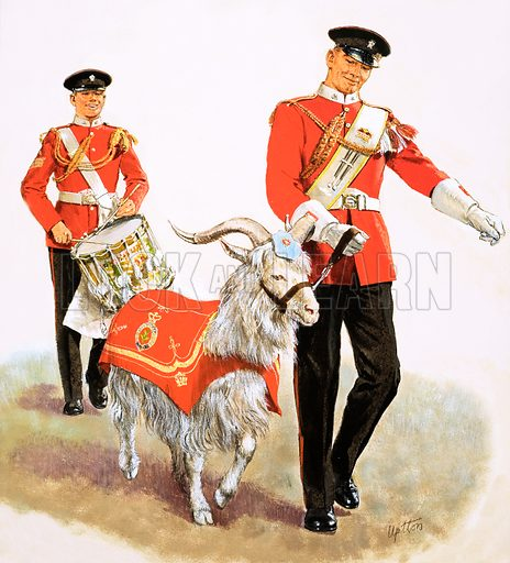Goat. An army mascot resplendent in his ceremonial coat with the Goat Major and drummer escort of the 6th Battalion of the Welch Regiment. Original cover artwork from Treasure no. 91 (10 October 1964; reused in Look and Learn Book of Pets 1973).