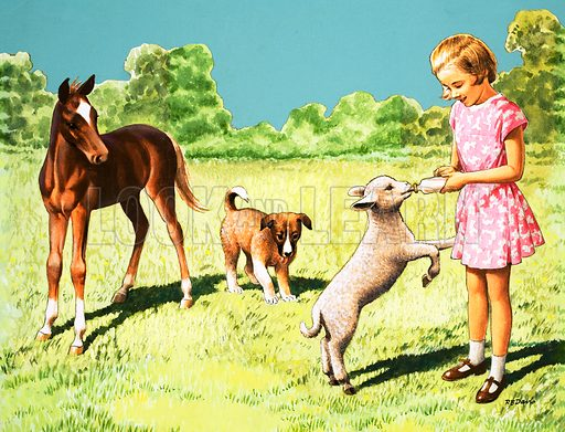 Girl feeding lamb. Original artwork from The Look and Learn Book of Pets 1973.
