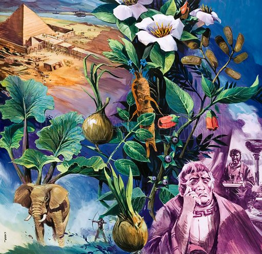 Unidentified montage of plants, elephant and pyramid. Original artwork (labelled Book of Nature 1985).