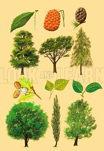 Unidentified montage of trees and leaves. Original artwork (labelled Book of Nature 1985).
