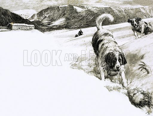 So That's Why… These Mountain Dogs are called St Bernards. Original artwork from Look and Learn no. 247 (8 October 1966).