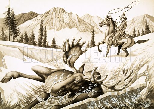 The Hunter, illustration for story by John Onslow. A cowboy in British Columbia lassoes a bull moose. Original artwork from Look and Learn no. 362 (21 December 1968).