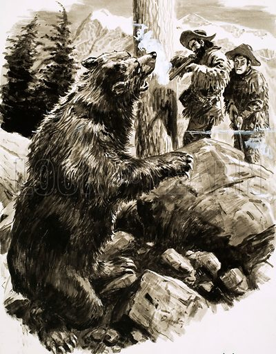 Mightiest Bear in the West. American grizzly bear being shot by trappers. Original artwork from Look and Learn no. 481 (3 April 1971).