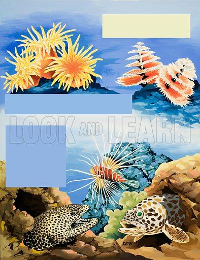 Unidentified underwater flora and fauna. Original artwork from Treasure annual 1971.