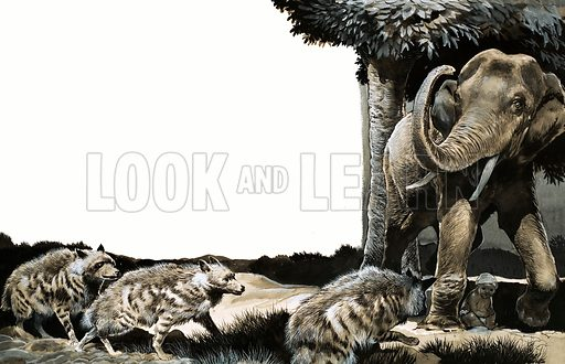 The Baby-Sitter, illustration of elephant protecting a child from hyenas based on the story by Norah Burke. Original artwork from Look and Learn no. 307 (2 December 1967).