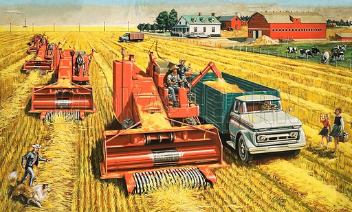 Canadian wheat harvest. Combine harvesters harvest wheat on the vast plains of Canada. Oriignal artwork from Treasure no. 38 (5 October 1963).