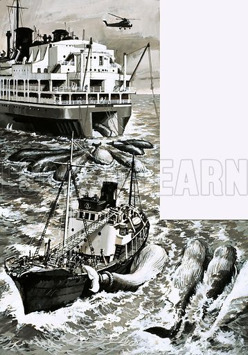 Can We Save the Whale from Extinction? A whaling factory ship. From Look and Learn Book 1977.