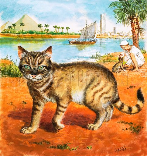 Cat in on the banks of the Nile. Original artwork (labelled Pets Book).