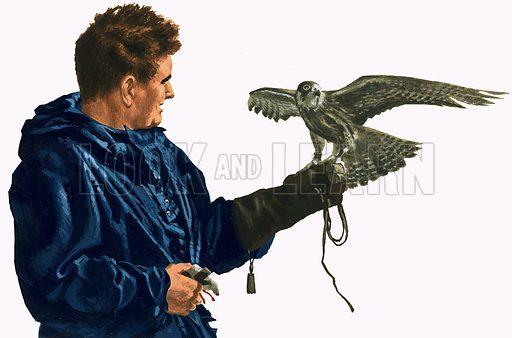 Man holding a bird of prey. Original artwork.