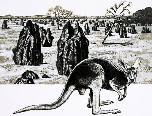 This is Australia: Heart of the North. Large termite mounds near Darwin, Australia, and a kangaroo in foreground. Original artwork from Look and Learn no. 609 (15 September 1973).
