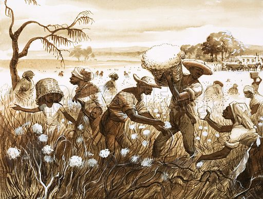 Slaves picking cotton on a plantation in the Southern United States. Original artwork.