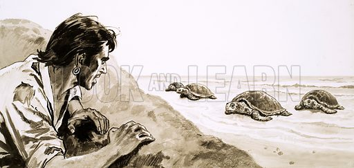 The Castaways: Terror of Turtle Island. Hiding behind a hillock, Pedro Serrano lay in wait until a number of turtles had gathered on the sandy beach. Original artwork from Look and Learn no. 416 (3 January 1970).