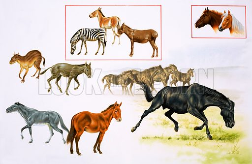 Montage of horses and horse-like animals. Original artwork (dated 10/4/80).