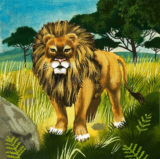 Lion. Original cover artwork from Look and Learn no. 171 (24 April 1965).
