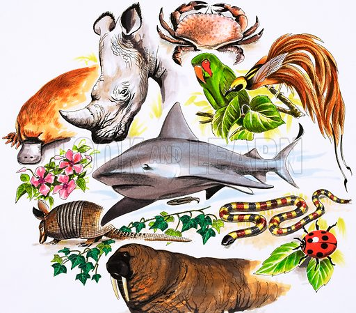 Unidentified montage of animals, including duck-billed platypus, rhinoceros, crab, parrot, bird of paradise, shark, aardvark, snake, ladybird and walrus. Original artwork.