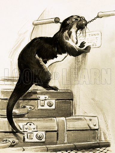 Otter stopping the train. Unidentified illustration from Look and Learn. Original artwork.