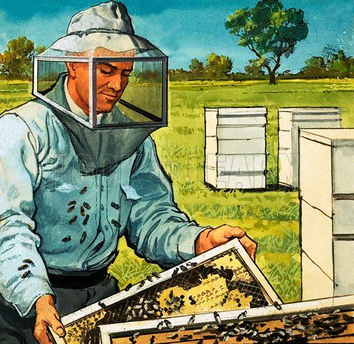 Bee keeper. Original artwork 1001 Book.