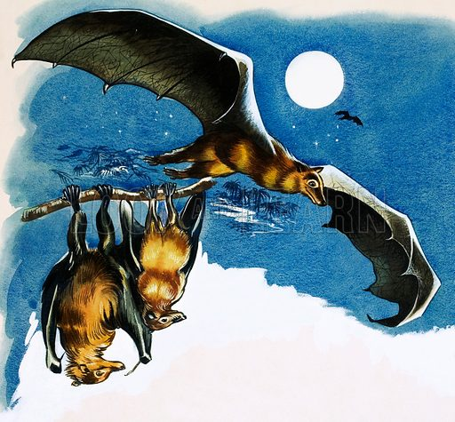 Different species of bat. Original artwork (dated 17 June).