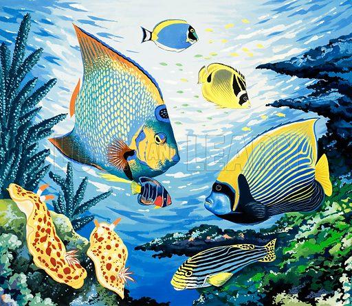 Tropical fish. Original artwork.