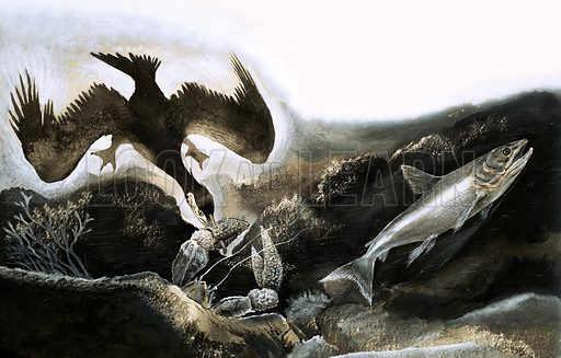The Last Defence, illustration based on a story by FG Turnbull. A salmon being hunted by a cormorant. Original artwork from Look and Learn no. 290 (5 August 1967).