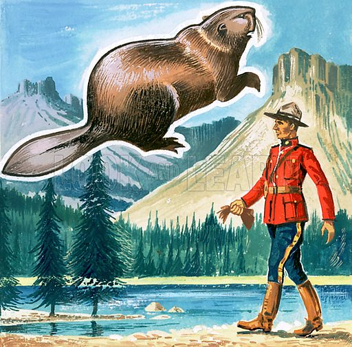Picture Quiz -- animal emblems of many countries. The beaver, emblem of Canada. Original artwork for cover quiz from Look and Learn no. 208 (8 January 1966).