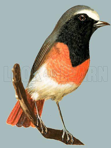 Unidentified bird. Original artwork.