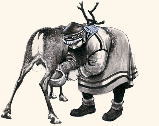 Ancient Peoples of the World: People of the Midnight Sun – Laplanders. Milking a reindeer. Original artwork from Look and Learn no. 104 (11 January 1964).