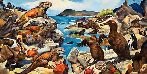 Unidentified lizards, birds, crabs and creatures on a rocky shoreline. Original artwork (dated 23/7/71).