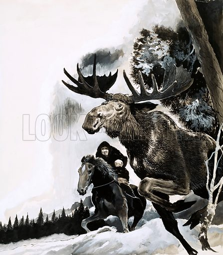 The Way of the Wild. Illustration for short story by John Onslow. Hunting a bull moose. Original artwork from Look and Learn no. 370 (15 February 1969).