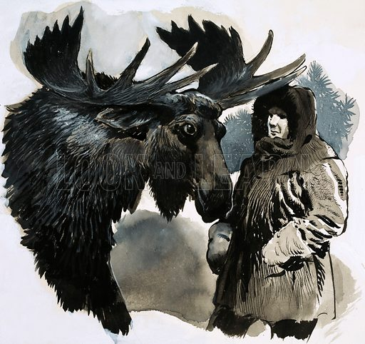 The Way of the Wild. Illustration for short story by John Onslow. A bull moose. Original artwork from Look and Learn no. 370 (15 February 1969).