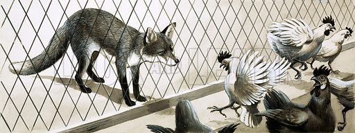 Fox eying chickens. Original artwork.