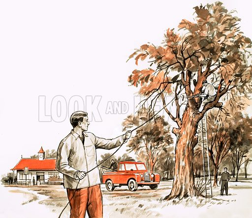 Tree surgeon.  Original artwork.
