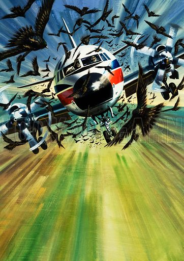 Birdstrike! A passenger airliner threatened by a flock of birds. Original artwork from Look and Learn Book 1978.