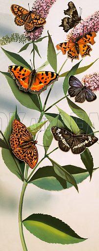 Montage of butterflies. Original artwork.