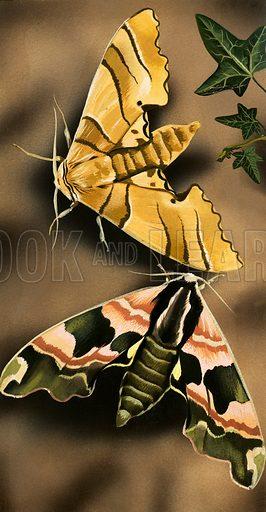 Moths. Original artwork.