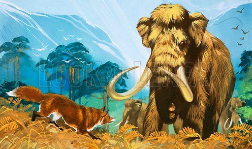 Fox attacking mammoth