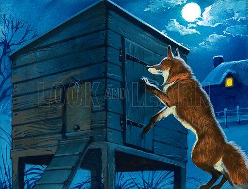 Fox at the chicken hut.
