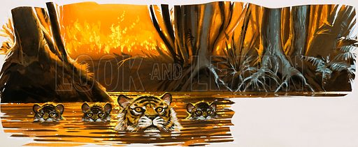 Tigers in the water.