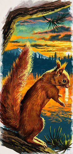 Red squirrel by lake.