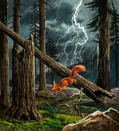 Red squirrel in a storm.