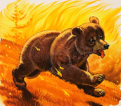 Bear cub escaping forest fire.
