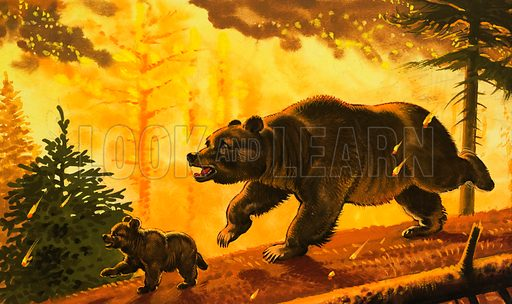 Bear and its cub running from forest fire.